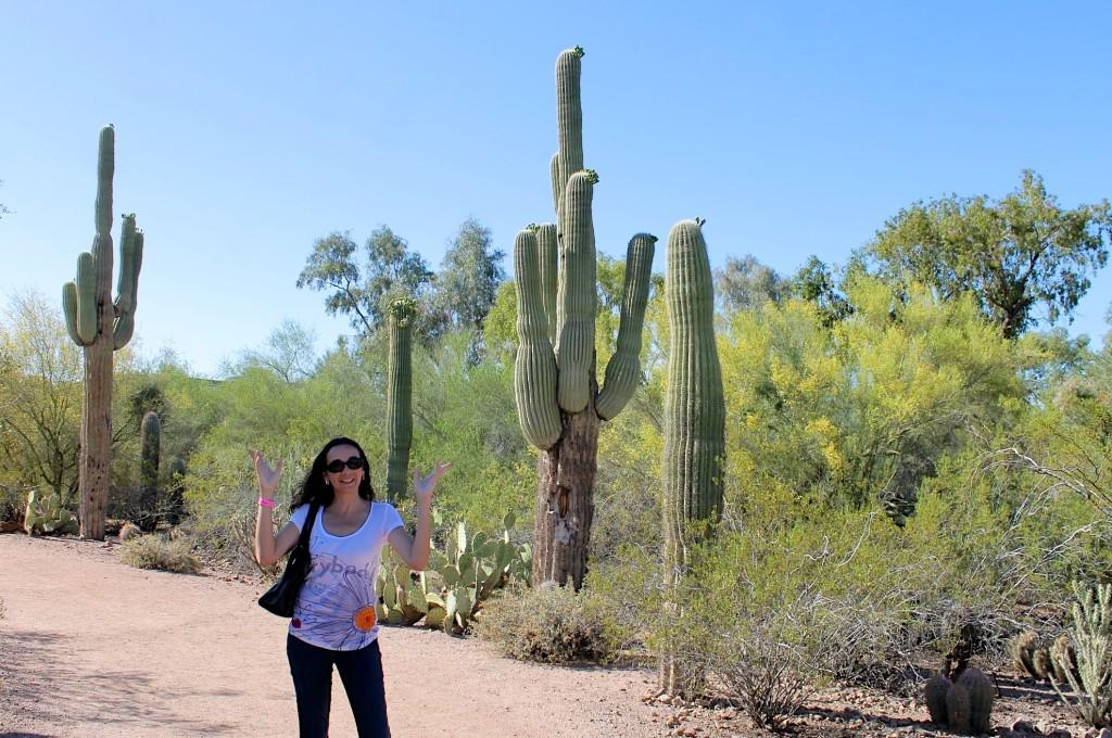 The Desert In Bloom At The Desert Botanical Garden In Phoenix Growing Up Bilingual