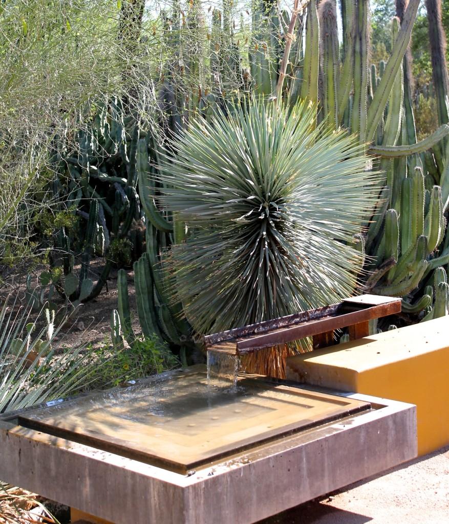 The desert in bloom at the desert botanical garden in for Garden fountains phoenix